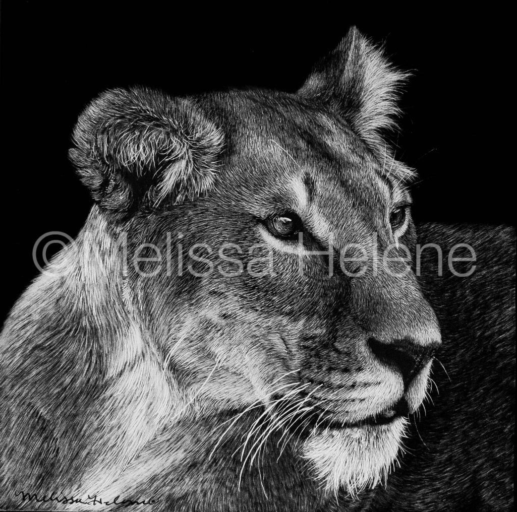 Lioness 4 (wm)