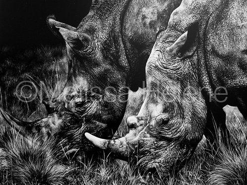 Rhinoceros | Reproduction
