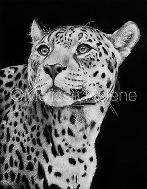 Melissa Helene Fine Arts, Jaguar scratchboard, wildlife artwork, jaguar artwork, artwork, big cat artwork