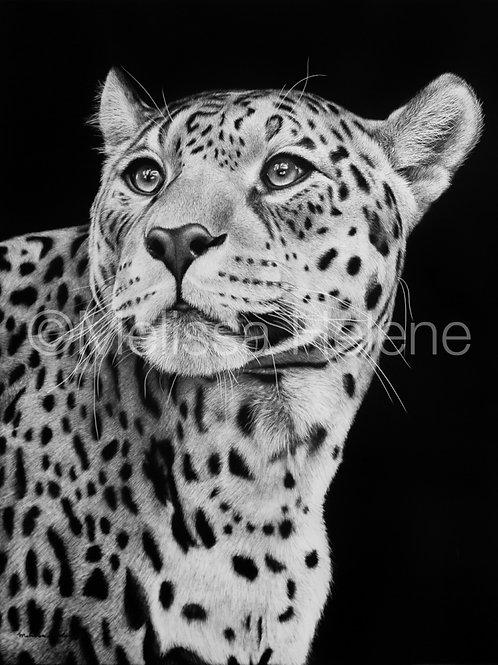 "Jaguar | Original | 14""x11"""