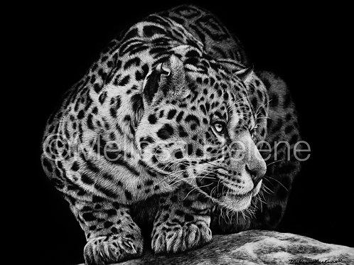 "Jaguar   Original   8""x10"""
