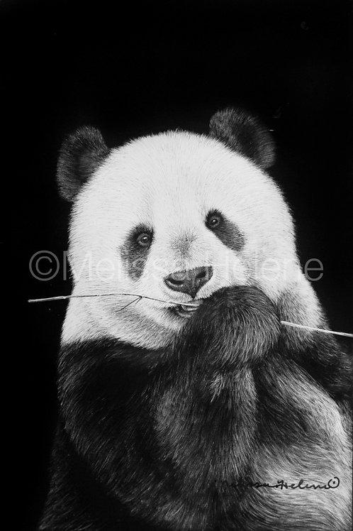"Giant Panda | Original | 6""x4"""