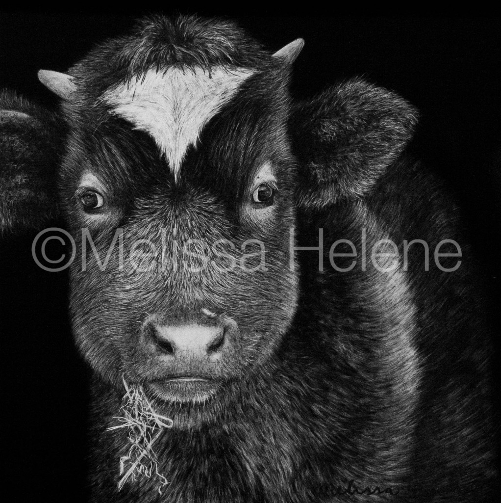 Cow 5 (wm)