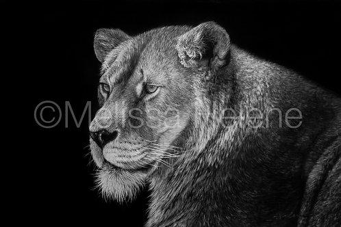 "African Lioness | Original | 4""x6"""
