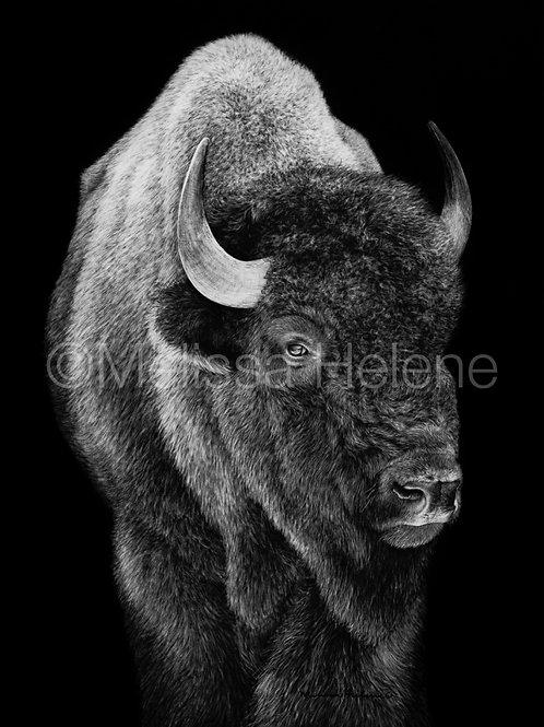 "American Bison | Original | 12""x9"""