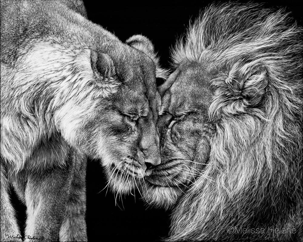 African lion, lions, lion, artwork, scratchboard artwork, wildlife artwork, art, animal art, endangered species