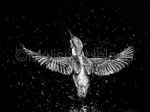 "Kingfisher | Original | 8""x10"""