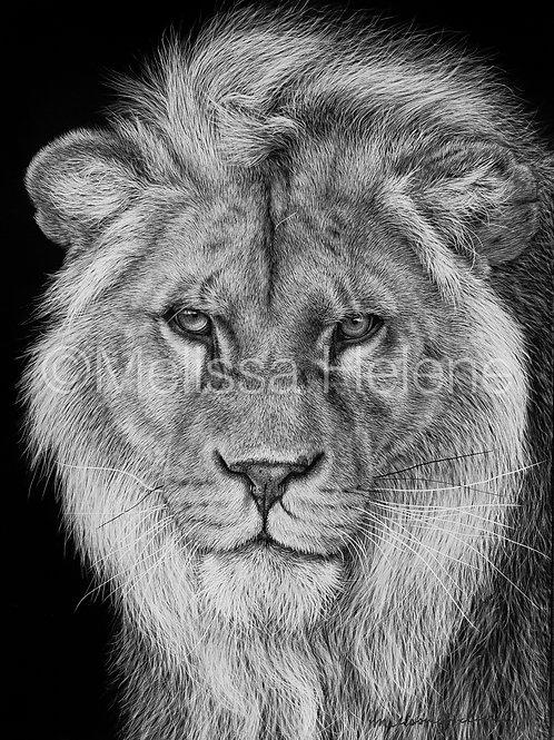 "African Lion | Original | 7""x5"""