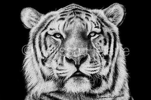 "Tiger   Original   4""x6"""