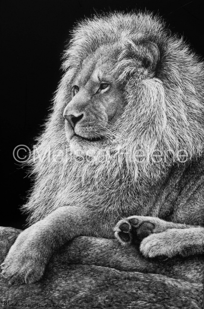 Lion 6 (wm)