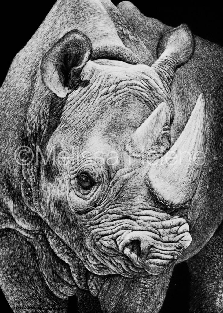 Rhino 2 (wm)