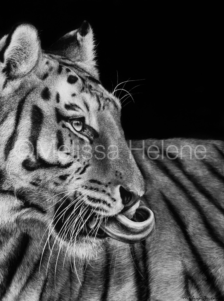 Tiger 5 (wm)