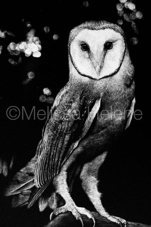 Barn Owl | Reproduction