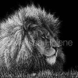 Lion 7 (wm)