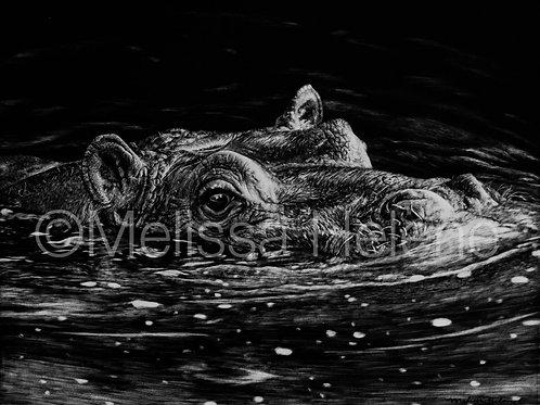 Hippopotamus | Reproduction