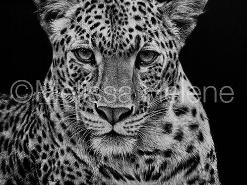 Leopard | Reproduction