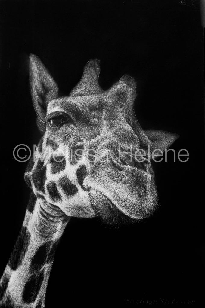 Giraffe 6 (wm)