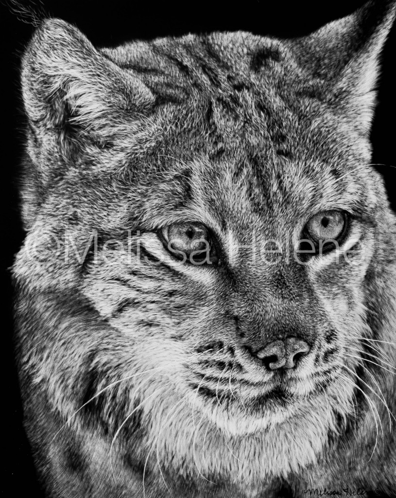 Lynx 2 (wm)