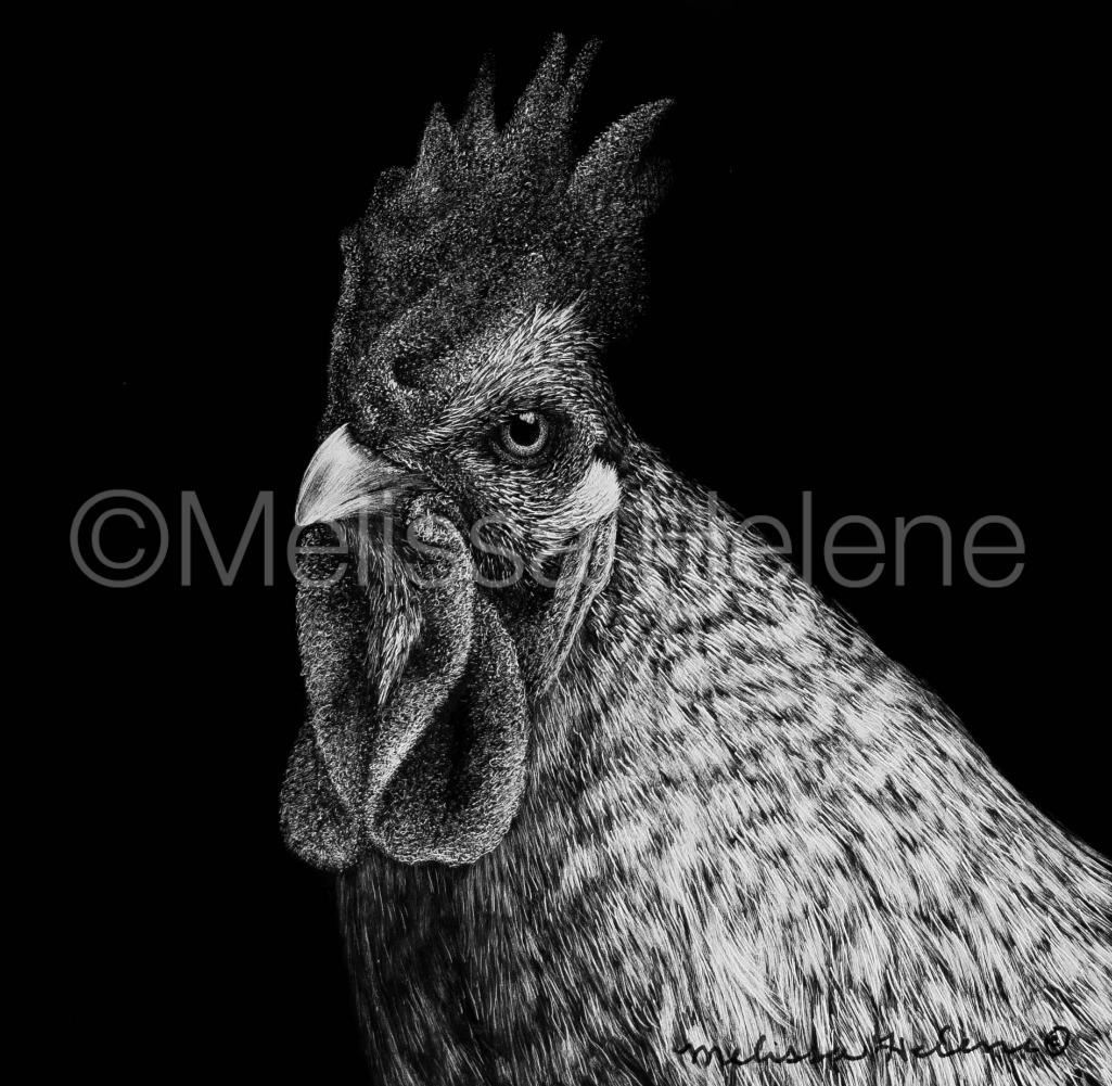 Bird - Chicken 4 (wm)