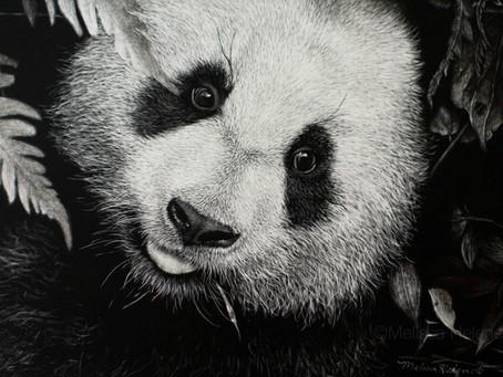 Giant Panda | Endangered Species Series