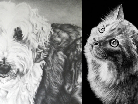 Pet Portraits | Celebrating Our Furry + Feathered Friends