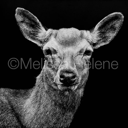 "Mule Deer | Original | 8""x8"""