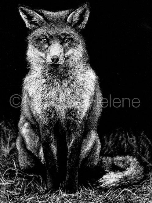 Fox | Reproduction