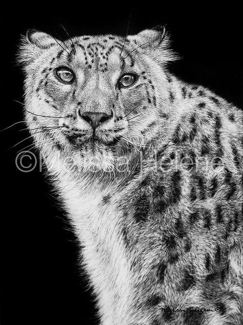 """Snow Leopard   Original   7""""x5"""""""