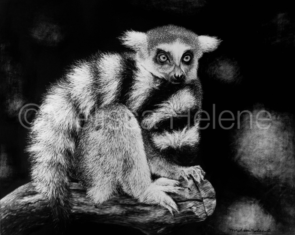 Lemur, Ring-tailed (wm)