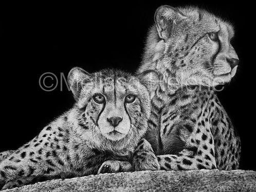 Baby Cheetahs | Reproduction