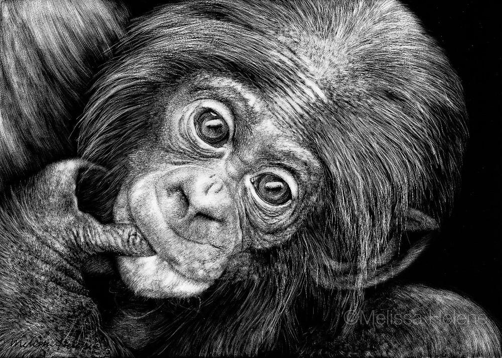 Bonobo (wm).jpg