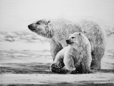 Polar Bears | Endangered Species Series