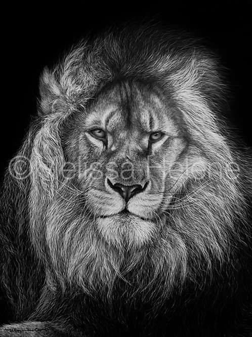 African Lion 02 | Reproduction