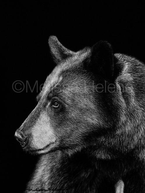 "American Black Bear | Original | 7""x5"""