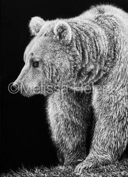 Bear, Grizzly (wm)