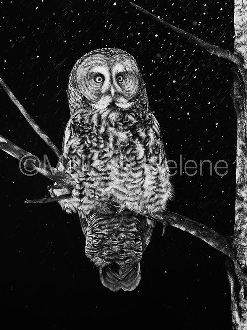 "Great Grey Owl   Original   20""x16"""