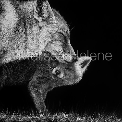"""Red Foxes 