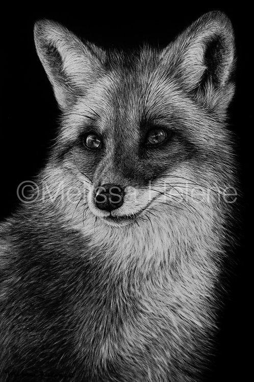 """Red Fox   Original   6""""x4"""""""