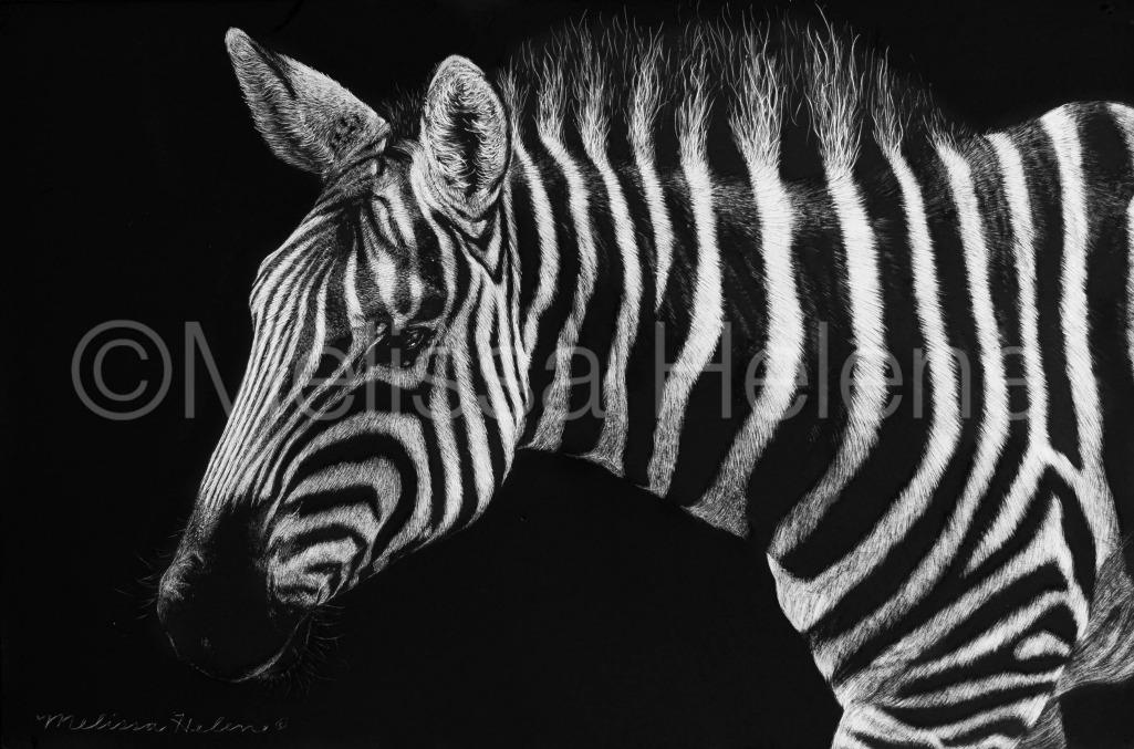 Zebra 4 (wm)