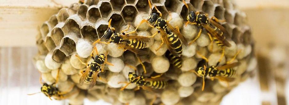 main_wasp-nest-banner-compressor-1024x37