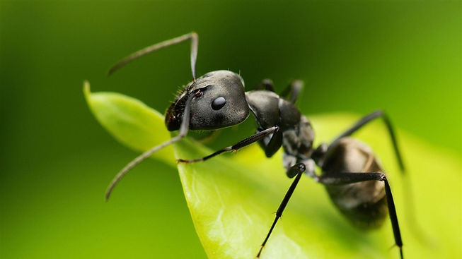 Small_ant-Animal_photography_HD_wallpape