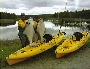 Yellow kayaks, halibut, fishing
