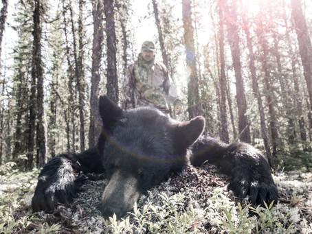 5 YARD KILL - CANADIAN BLACK BEAR HUNT