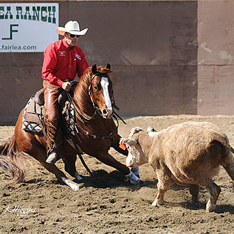 Cow Cutting Clinic (FOR BEGINNERS) - Nampa ID