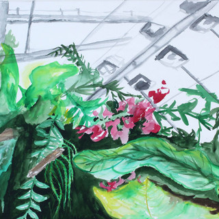 Bergianska green house