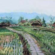 Rice field Chiang Mai