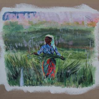 Lady in rice field