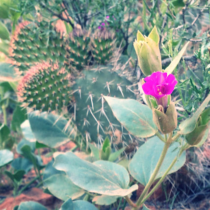 Southern Utah Blooming Cactus Happy Trails Adventure