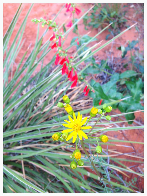 Yellow and Red Wild Flowers Happy Trails Adventure