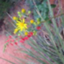 Southern Utah Wild Flowers Happy Trails Adventure